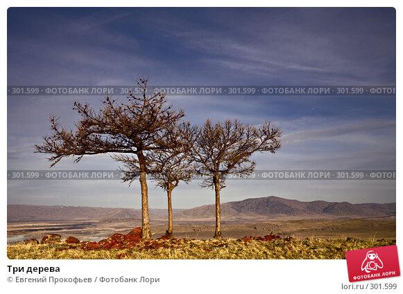 Три дерева, фото № 301599, снято 20 апреля 2008 г. (c) Евгений Прокофьев / Фотобанк Лори