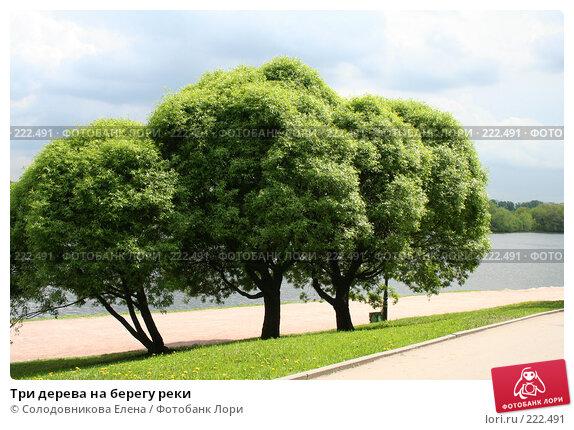 Три дерева на берегу реки, фото № 222491, снято 24 мая 2006 г. (c) Солодовникова Елена / Фотобанк Лори