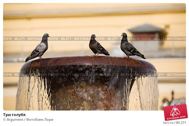 Три голубя, фото № 80271, снято 23 августа 2007 г. (c) Argument / Фотобанк Лори