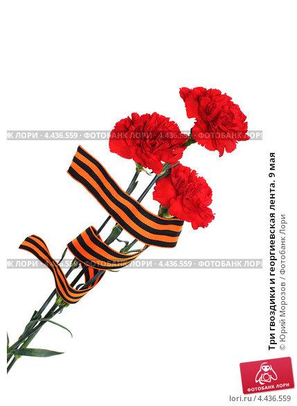 Купить «Три гвоздики и георгиевская лента. 9 мая», эксклюзивное фото № 4436559, снято 23 марта 2013 г. (c) Юрий Морозов / Фотобанк Лори