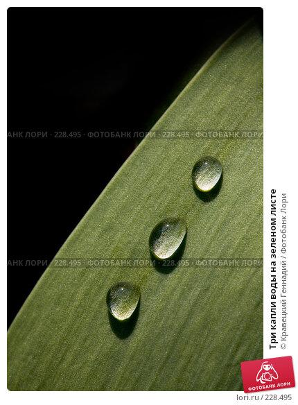 Три капли воды на зеленом листе, фото № 228495, снято 23 апреля 2006 г. (c) Кравецкий Геннадий / Фотобанк Лори
