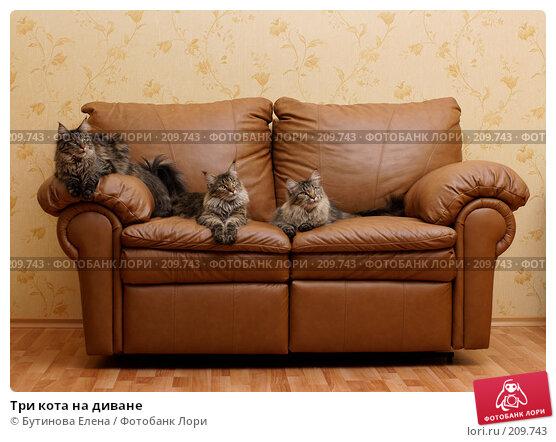 Три кота на диване, фото № 209743, снято 26 февраля 2008 г. (c) Бутинова Елена / Фотобанк Лори