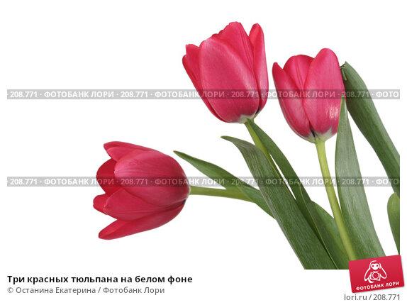 Купить «Три красных тюльпана на белом фоне», фото № 208771, снято 15 января 2008 г. (c) Останина Екатерина / Фотобанк Лори