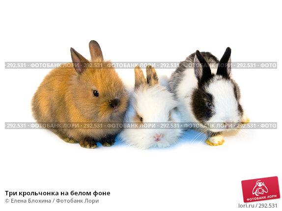 Три крольчонка на белом фоне, фото № 292531, снято 20 мая 2008 г. (c) Елена Блохина / Фотобанк Лори