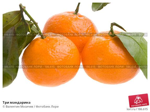 Три мандарина, фото № 186615, снято 20 января 2008 г. (c) Валентин Мосичев / Фотобанк Лори