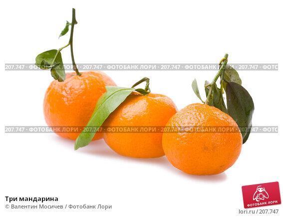 Три мандарина, фото № 207747, снято 20 января 2008 г. (c) Валентин Мосичев / Фотобанк Лори