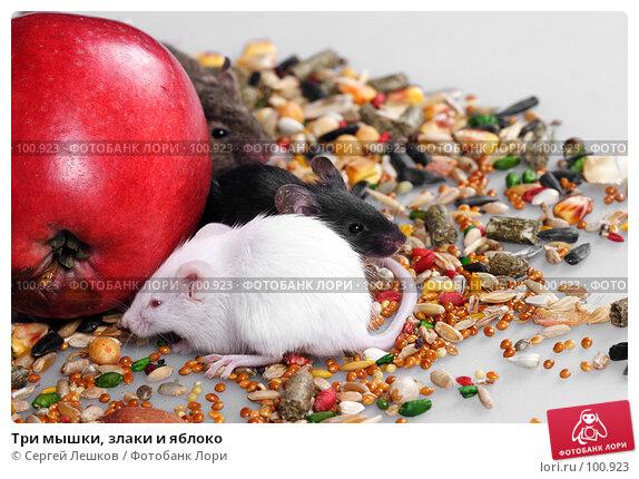 Три мышки, злаки и яблоко, фото № 100923, снято 23 сентября 2007 г. (c) Сергей Лешков / Фотобанк Лори