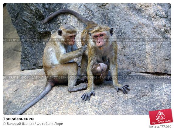 Три обезьянки, фото № 77019, снято 1 июня 2007 г. (c) Валерий Шанин / Фотобанк Лори