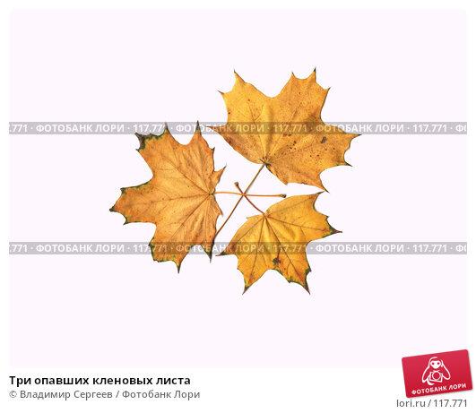 Три опавших кленовых листа, фото № 117771, снято 17 января 2017 г. (c) Владимир Сергеев / Фотобанк Лори