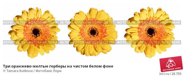 Три оранжево-желтые герберы на чистом белом фоне, фото № 28755, снято 20 января 2017 г. (c) Tamara Kulikova / Фотобанк Лори