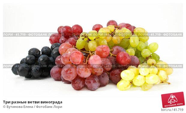 Три разные ветви винограда, фото № 41719, снято 25 марта 2007 г. (c) Бутинова Елена / Фотобанк Лори