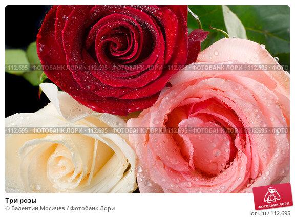 Три розы, фото № 112695, снято 10 февраля 2007 г. (c) Валентин Мосичев / Фотобанк Лори