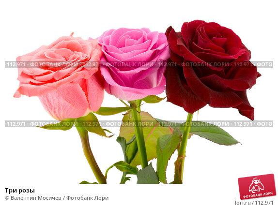 Три розы, фото № 112971, снято 3 марта 2007 г. (c) Валентин Мосичев / Фотобанк Лори