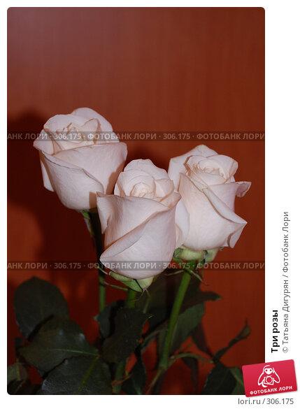 Три розы, фото № 306175, снято 1 июня 2008 г. (c) Татьяна Дигурян / Фотобанк Лори