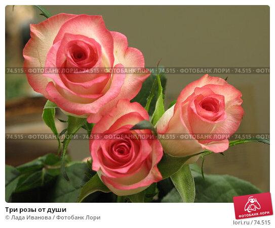 Три розы от души, фото № 74515, снято 16 июня 2007 г. (c) Лада Иванова / Фотобанк Лори