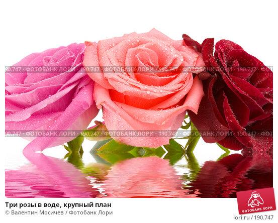 Три розы в воде, крупный план, фото № 190747, снято 3 марта 2007 г. (c) Валентин Мосичев / Фотобанк Лори