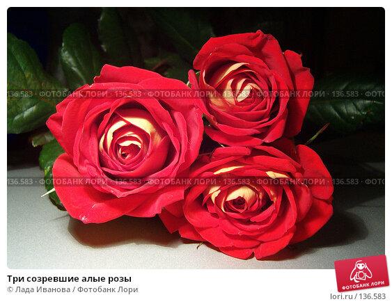 Три созревшие алые розы, фото № 136583, снято 11 апреля 2006 г. (c) Лада Иванова / Фотобанк Лори