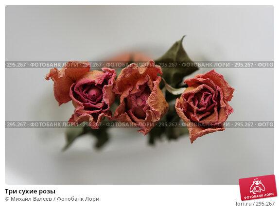 Три сухие розы, фото № 295267, снято 25 июля 2007 г. (c) Михаил Валеев / Фотобанк Лори