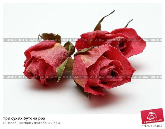 Три сухих бутона роз, фото № 28067, снято 23 февраля 2007 г. (c) Павел Преснов / Фотобанк Лори