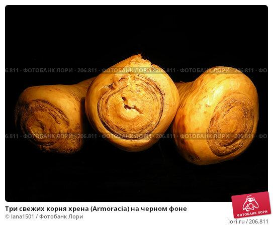 Купить «Три свежих корня хрена (Armoracia) на черном фоне», эксклюзивное фото № 206811, снято 19 февраля 2008 г. (c) lana1501 / Фотобанк Лори