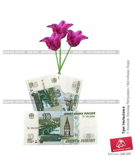 Три тюльпана, фото № 246091, снято 6 декабря 2016 г. (c) Коннов Леонид Петрович / Фотобанк Лори