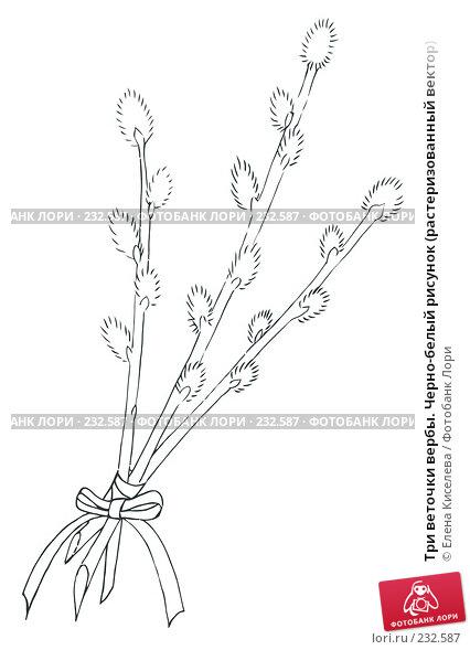 Три веточки вербы. Черно-белый рисунок (растеризованный вектор), иллюстрация № 232587 (c) Елена Киселева / Фотобанк Лори