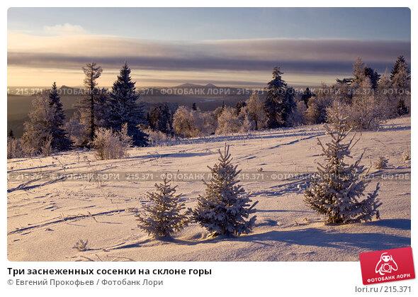 Три заснеженных сосенки на склоне горы, фото № 215371, снято 8 января 2008 г. (c) Евгений Прокофьев / Фотобанк Лори
