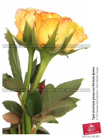 Купить «Три желтых розы на белом фоне», фото № 68951, снято 4 августа 2007 г. (c) Останина Екатерина / Фотобанк Лори