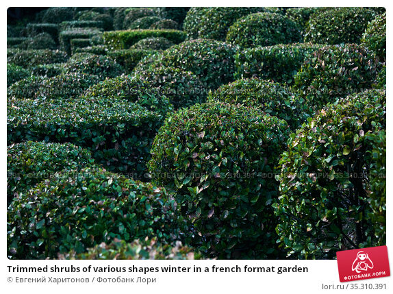 Trimmed shrubs of various shapes winter in a french format garden. Стоковое фото, фотограф Евгений Харитонов / Фотобанк Лори