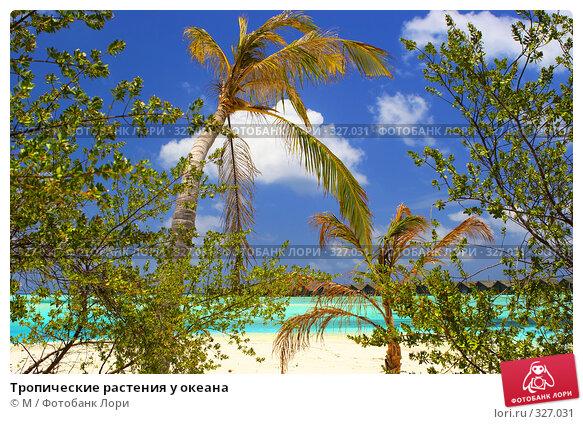 Тропические растения у океана, фото № 327031, снято 27 июля 2017 г. (c) Михаил / Фотобанк Лори