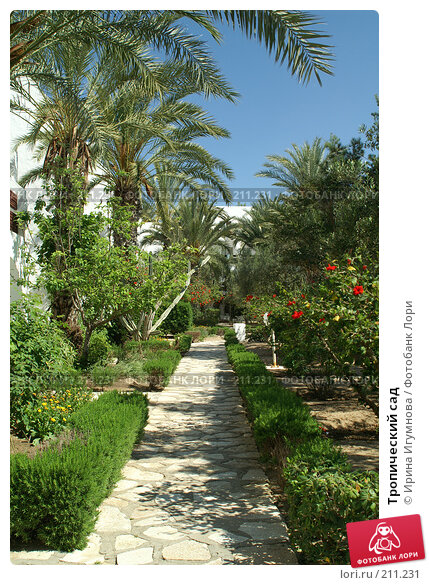Тропический сад, фото № 211231, снято 8 июня 2006 г. (c) Ирина Игумнова / Фотобанк Лори