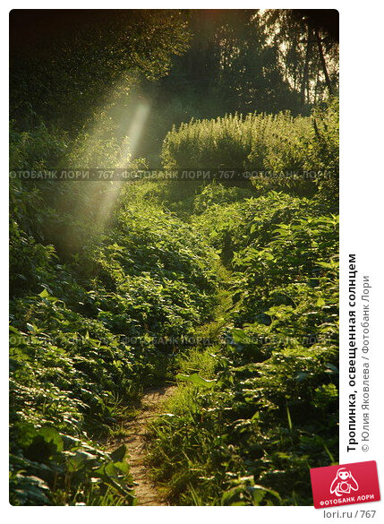 Тропинка, освещенная солнцем, фото № 767, снято 5 августа 2005 г. (c) Юлия Яковлева / Фотобанк Лори