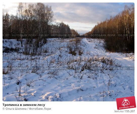 Тропинка в зимнем лесу, фото № 155207, снято 20 декабря 2007 г. (c) Ольга Шилина / Фотобанк Лори