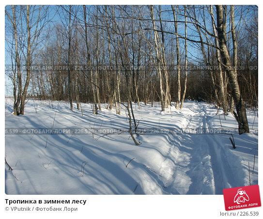 Тропинка в зимнем лесу, фото № 226539, снято 25 февраля 2007 г. (c) VPutnik / Фотобанк Лори