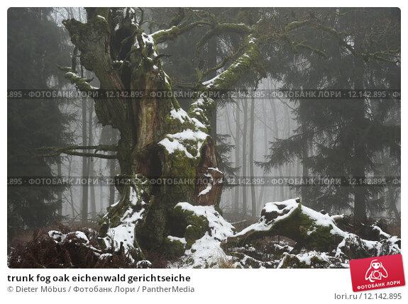 Купить «trunk fog oak eichenwald gerichtseiche», фото № 12142895, снято 16 июня 2019 г. (c) PantherMedia / Фотобанк Лори