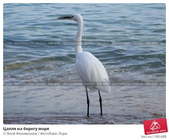 Цапля на берегу моря, фото № 195699, снято 19 января 2008 г. (c) Яков Филимонов / Фотобанк Лори