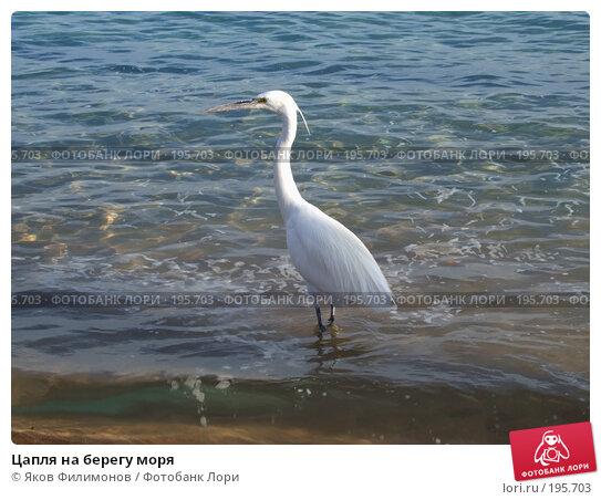 Цапля на берегу моря, фото № 195703, снято 19 января 2008 г. (c) Яков Филимонов / Фотобанк Лори