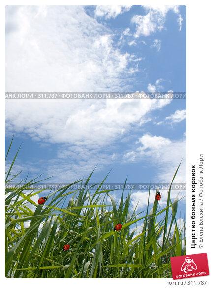 Купить «Царство божьих коровок», фото № 311787, снято 2 июня 2008 г. (c) Елена Блохина / Фотобанк Лори