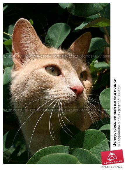 Целеустремленный взгляд кошки, фото № 25927, снято 24 июля 2005 г. (c) Сафронова Мария / Фотобанк Лори