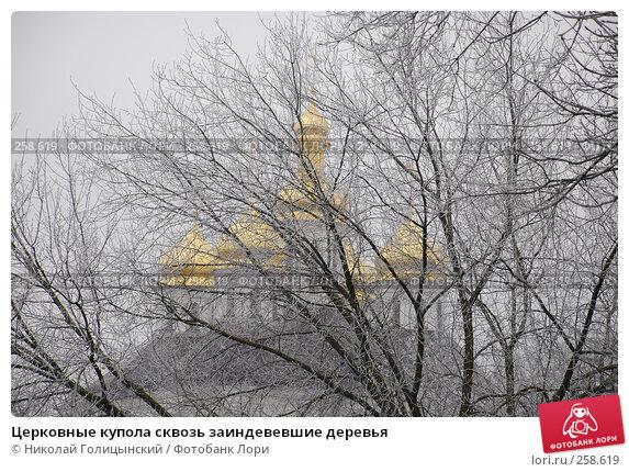 Церковные купола сквозь заиндевевшие деревья, фото № 258619, снято 12 февраля 2008 г. (c) Николай Голицынский / Фотобанк Лори