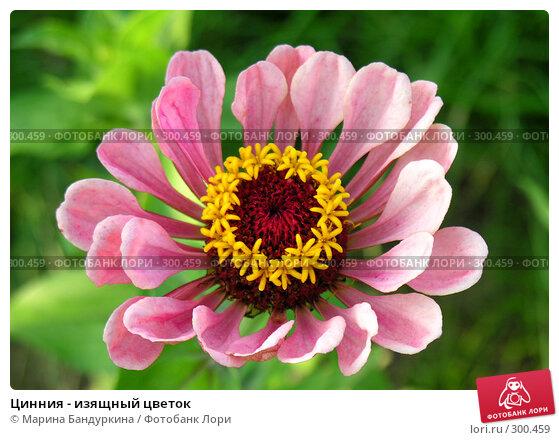 Цинния - изящный цветок, фото № 300459, снято 22 августа 2007 г. (c) Марина Бандуркина / Фотобанк Лори