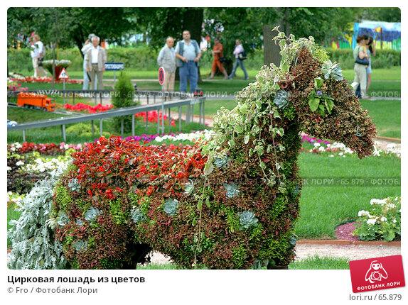 Цирковая лошадь из цветов, фото № 65879, снято 14 июля 2007 г. (c) Fro / Фотобанк Лори