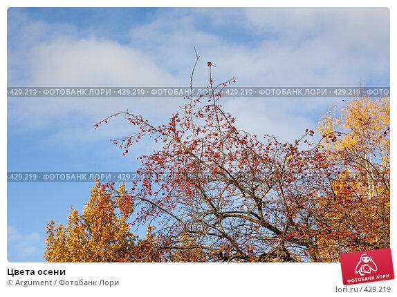 Купить «Цвета осени», фото № 429219, снято 20 октября 2007 г. (c) Argument / Фотобанк Лори