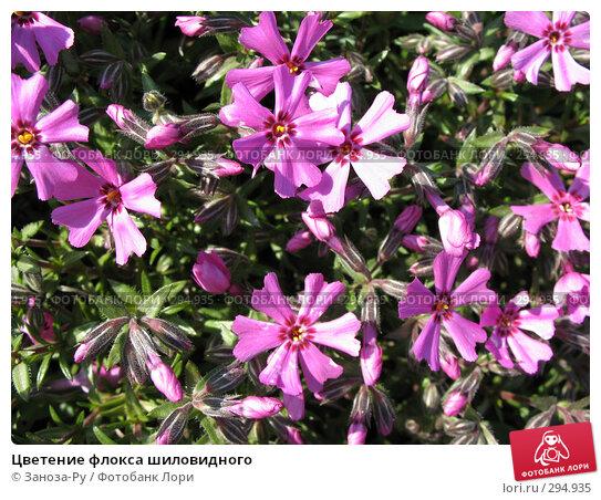 Цветение флокса шиловидного, фото № 294935, снято 17 мая 2008 г. (c) Заноза-Ру / Фотобанк Лори