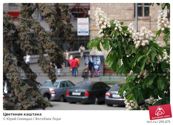 Цветение каштана, фото № 295875, снято 20 мая 2008 г. (c) Юрий Синицын / Фотобанк Лори