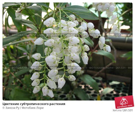 Цветение субтропического растения, фото № 261531, снято 12 апреля 2008 г. (c) Заноза-Ру / Фотобанк Лори