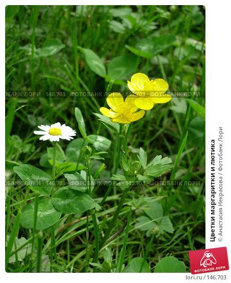 Цветки маргаритки и лютика, фото № 146703, снято 31 мая 2006 г. (c) Анастасия Некрасова / Фотобанк Лори