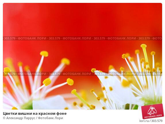 Купить «Цветки вишни на красном фоне», фото № 303579, снято 21 апреля 2008 г. (c) Александр Паррус / Фотобанк Лори