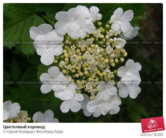 Цветковый хоровод, фото № 18551, снято 9 июня 2006 г. (c) Сергей Ксейдор / Фотобанк Лори