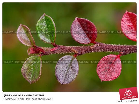 Купить «Цветные осенние листья», фото № 144607, снято 28 ноября 2006 г. (c) Максим Горпенюк / Фотобанк Лори